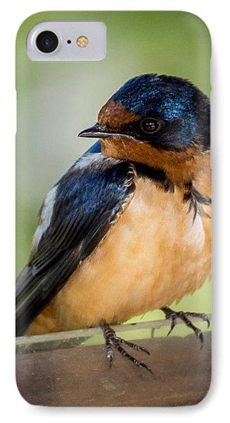 Barn Swallow IPhone Case by Ernie Echols