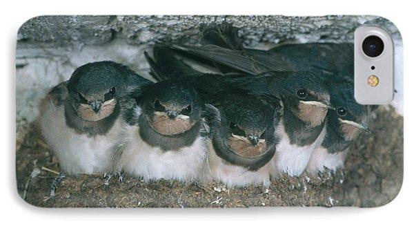 Barn Swallows Phone Case by Hans Reinhard