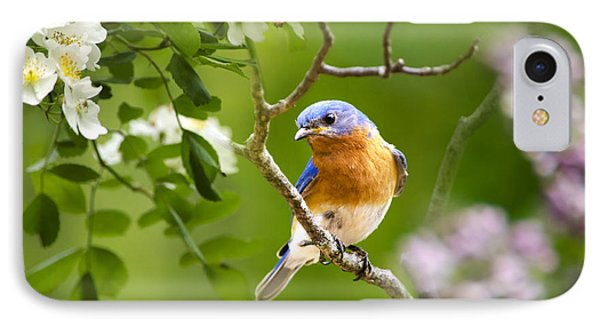 Beautiful Bluebird IPhone Case by Christina Rollo
