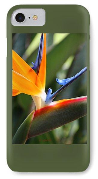 Beauty In Paradise IPhone Case by Kerri Ligatich