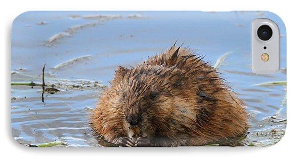 Beaver Portrait IPhone Case by Dan Sproul
