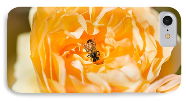 Bee Pollinating A Yellow Rose, Beverly IPhone Case by Panoramic Images