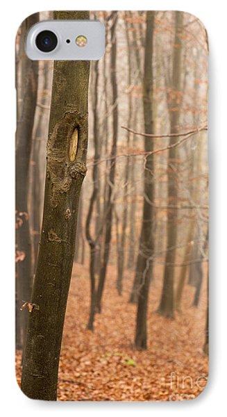 Beech Wood In Autumn Phone Case by Anne Gilbert