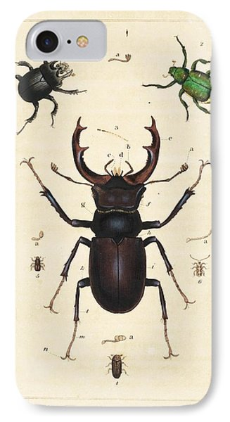 Beetles IPhone Case by King's College London