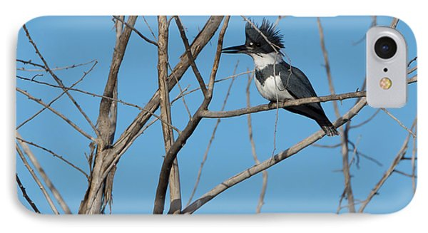 Belted Kingfisher 4 IPhone Case by Ernie Echols