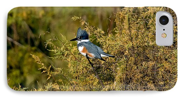 Belted Kingfisher Female IPhone Case by Anthony Mercieca
