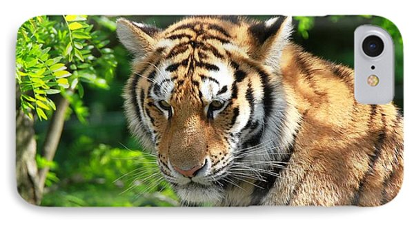 Bengal Tiger Portrait IPhone Case by Dan Sproul