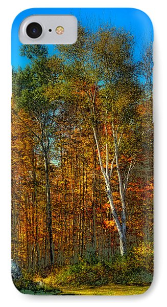 Birch Among The Maples IPhone Case by David Patterson