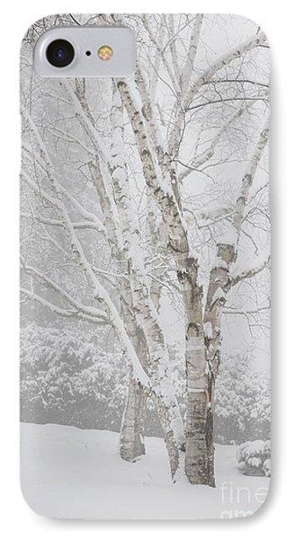 Birch Trees In Winter IPhone Case by Elena Elisseeva