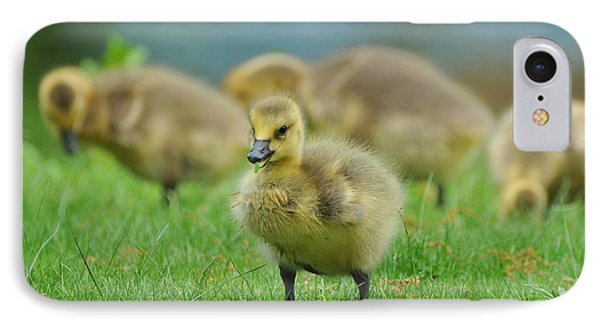 Bird - Baby Goose -leader Of The Pack Phone Case by Paul Ward