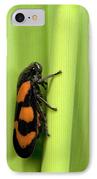 Black And Red Froghopper IPhone Case by Nigel Downer