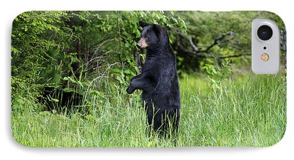 Black Bear Standing Upright Looking Phone Case by Dan Friend