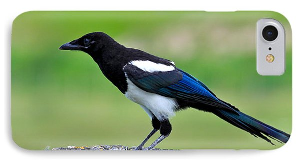 Black Billed Magpie IPhone Case by Karon Melillo DeVega