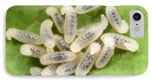 Black Garden Ant Larvae IPhone Case by Nigel Downer