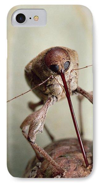 Black Oak Acorn Weevil Boring Into Acorn IPhone Case by Mark Moffett