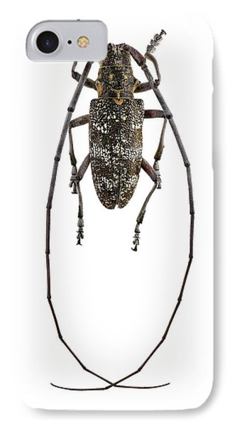 Black Pine Sawyer Beetle IPhone Case by F. Martinez Clavel