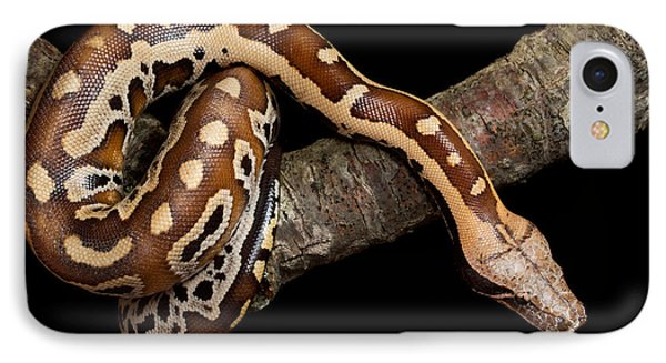 Blood Python Python Brongersmai IPhone 7 Case by David Kenny