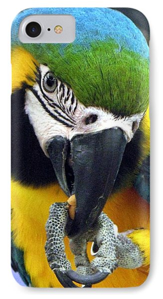 Blue And Gold Macaw With A Peanut Phone Case by  Andrea Lazar