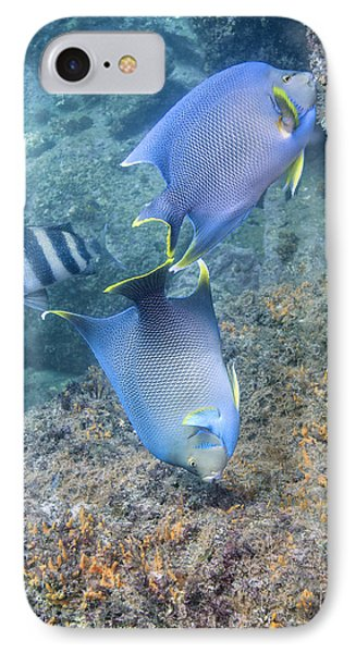 Blue Angelfish Feeding On Coral Phone Case by Michael Wood