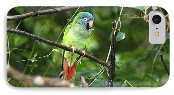 Blue Crowned Parakeet IPhone Case by James Brunker