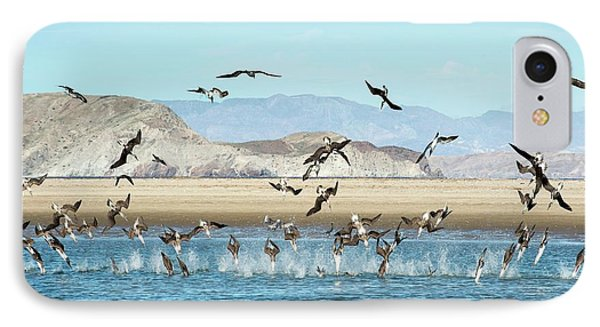 Blue-footed Boobies Feeding IPhone Case by Christopher Swann