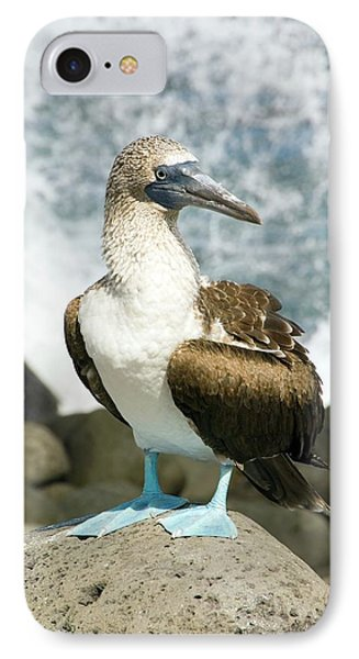 Blue-footed Booby IPhone Case by Daniel Sambraus