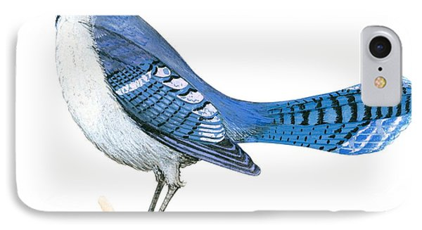 Blue Jay  IPhone 7 Case by Anonymous