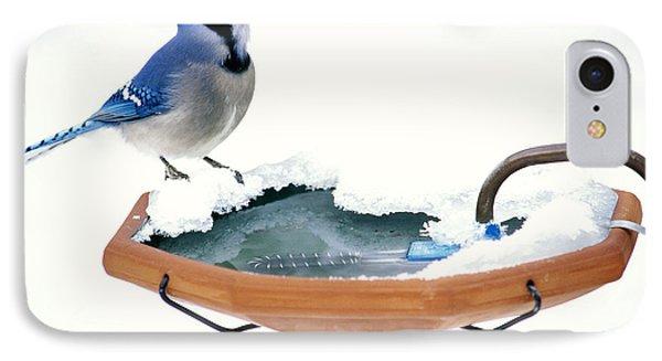 Blue Jay At Heated Birdbath IPhone Case by Steve and Dave Maslowski