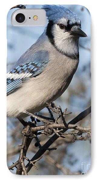 Blue Jay.. Phone Case by Nina Stavlund