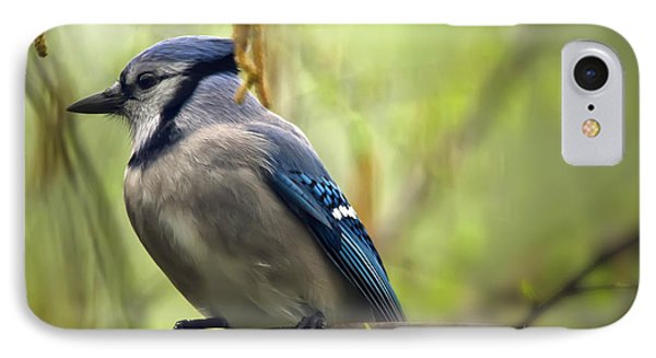 Blue Jay On A Misty Spring Day IPhone 7 Case by Lois Bryan