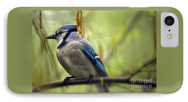 Blue Jay On A Misty Spring Day IPhone Case by Lois Bryan
