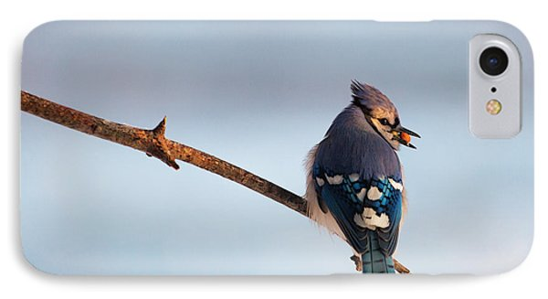 Blue Jay With Nuts IPhone 7 Case by Everet Regal