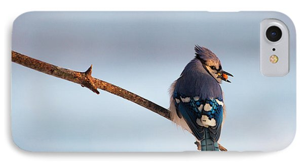 Blue Jay With Nuts IPhone Case by Everet Regal