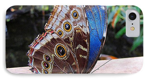 Blue Morpho IPhone Case by MTBobbins Photography
