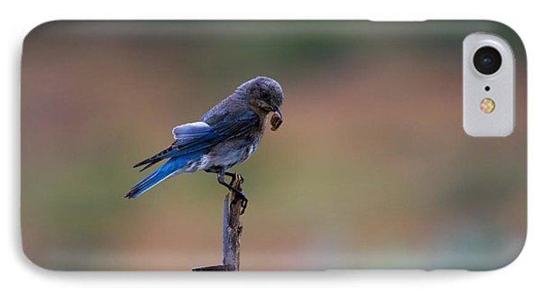 Bluebird Lunch IPhone Case by Mike  Dawson