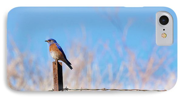 Bluebird On A Post IPhone Case by Mike  Dawson