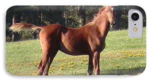Blythewood Farms Horse IPhone Case by Robin Vargo