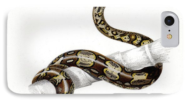 Boa Constrictor IPhone Case by Collection Abecasis