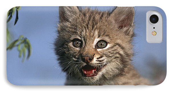Bobcat Kitten Phone Case by Tim Fitzharris