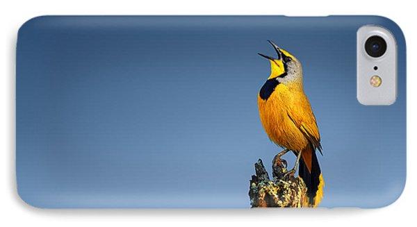 Bokmakierie Bird Calling IPhone Case by Johan Swanepoel