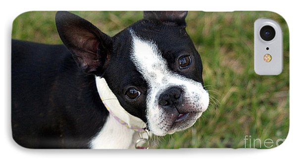 Boston Terrier Puppy IPhone Case by Marvin Blaine