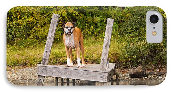 Boxer On Lake Dock Phone Case by Stephanie McDowell