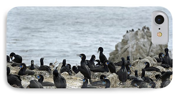 Brandt's Cormorant Colony At Point Lobos State Natural Reserve IPhone Case by Bruce Gourley