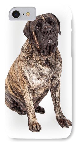 Brindle English Mastiff Dog Sitting IPhone Case by Susan Schmitz