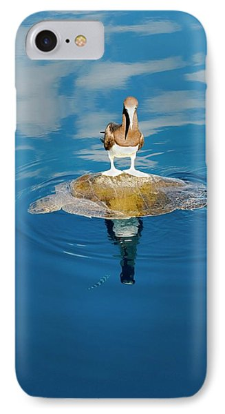 Brown Booby And Marine Turtle IPhone Case by Christopher Swann