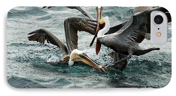 Brown Pelicans Stealing Food IPhone Case by Christopher Swann
