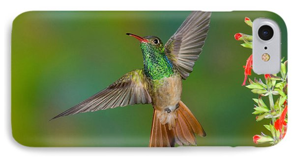 Buff-bellied Hummingbird Phone Case by Anthony Mercieca