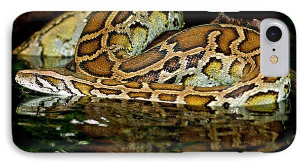 Burmese Python, Python Molurus IPhone 7 Case by David Northcott