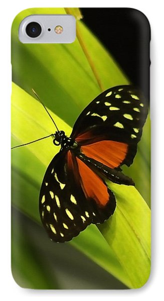 Butterfly On Leaves IPhone Case by Art Block Collections