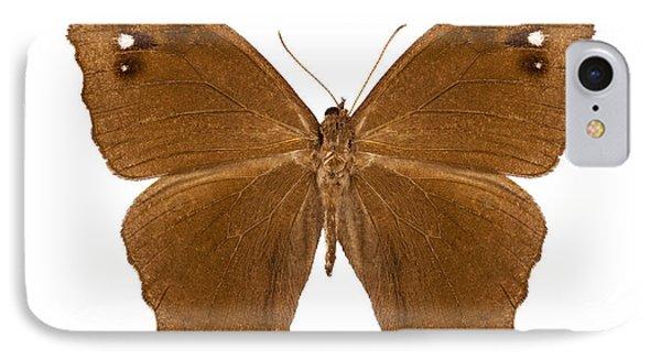 Butterfly Species Melanitis Leda  IPhone Case by Pablo Romero